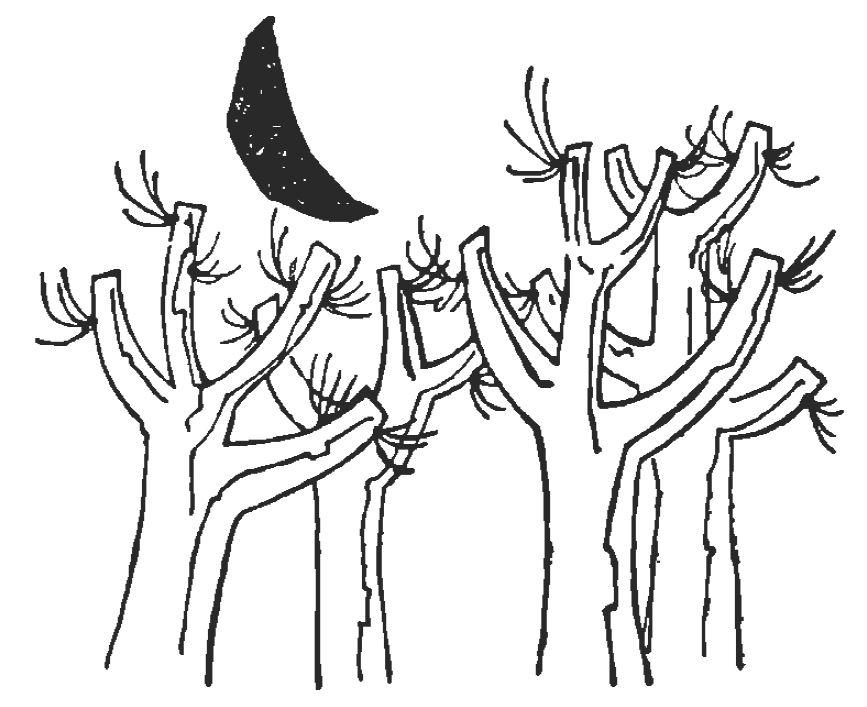 cardenal-ilustracion-01